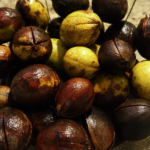 hickory nut recipe - hickory nut ambrosia step 1
