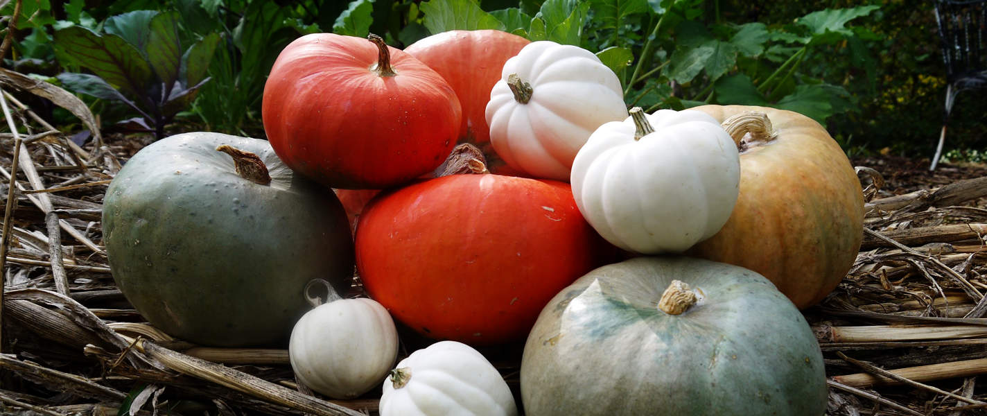 Tyrant Farms' Winter Squash & Pumpkins