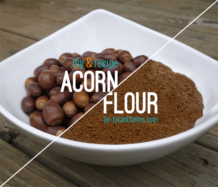 DIY: How to Make Acorn Flour at www.TyrantFarms.com