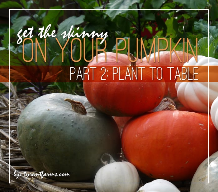 Pumpkin Part 2: How to Use Fresh Pumpkin - Tyrant Farms