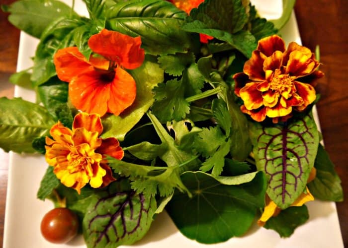 "A summer ""Flower Power"" salad at Tyrant Farms made from over a dozen types of fresh, homegrown herbs & leafy greens, plus edible red & yellow nasturtiums and marigolds. Yum!"