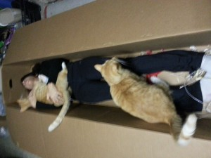 Susan and the von Kittens reusing one of the new plant boxes as a vampire coffin.