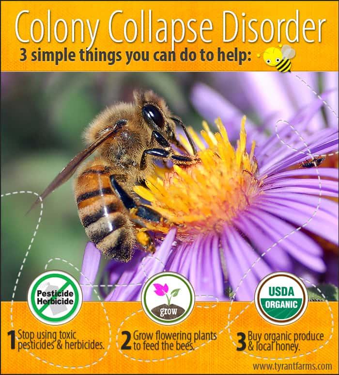 3 ways to save the honey bees, a blog post by Tyrant Farms (www.TyrantFarms.com)