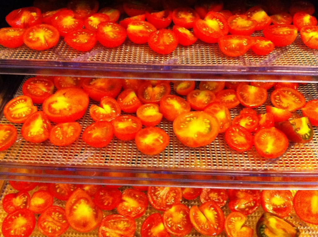 Sun-dried tomatoes going into the dehydrator at Tyrant Farms.