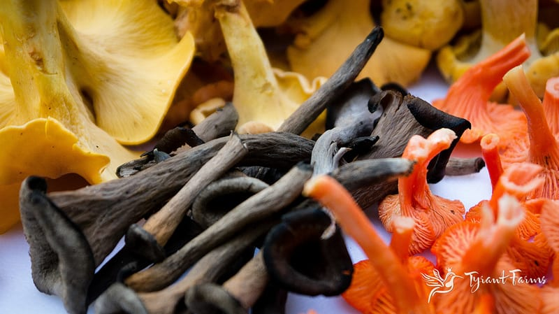 Gourmet wild mushrooms (chanterelles, black trumpets and cinnabars). These are the fruiting bodies of mycorrhizal organisms that produce symbiotic relationships with trees.