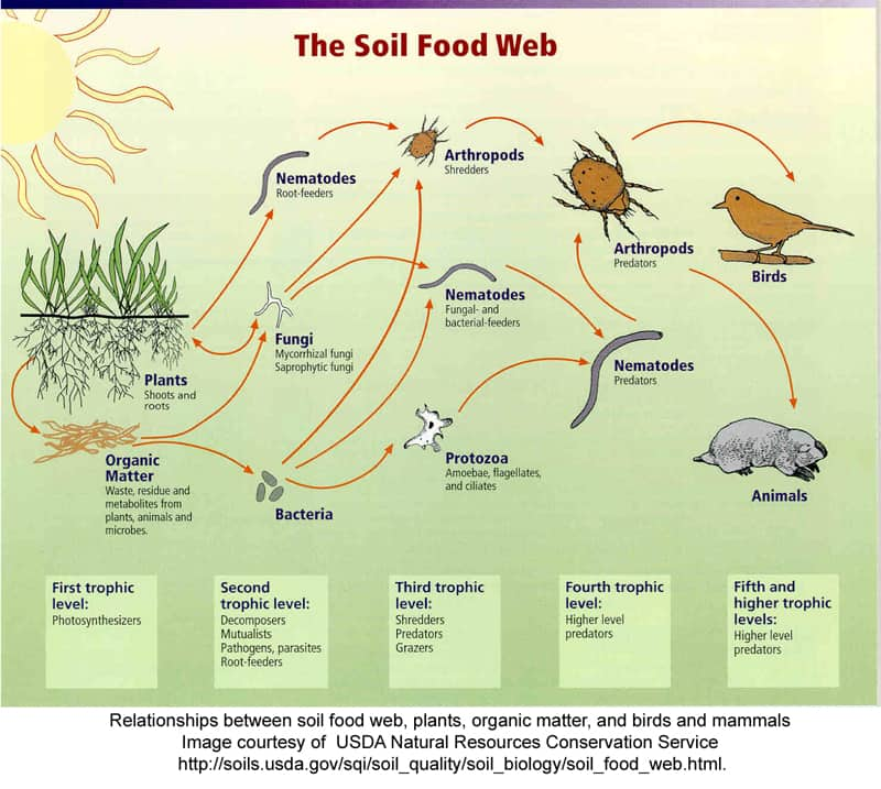 Some of the interconnections taking place that make your soil healthy. As far as we know, this doesn't come in a bottle and can't be sprayed onto your plants.