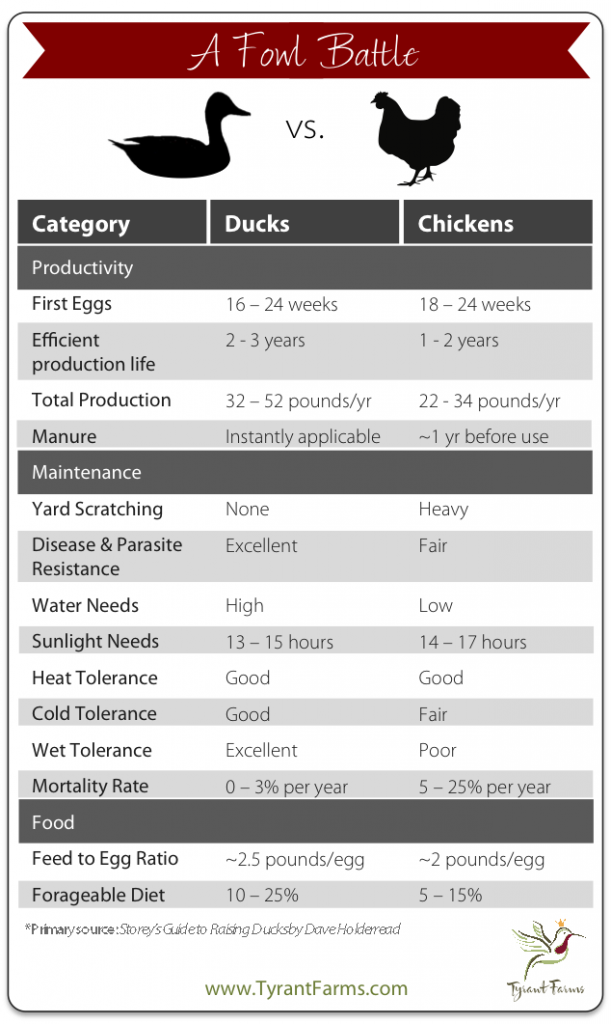 backyard ducks vs chickens comparison chart, by Tyrant Farms