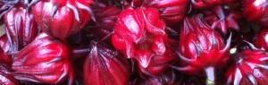 hibiscus calyxes