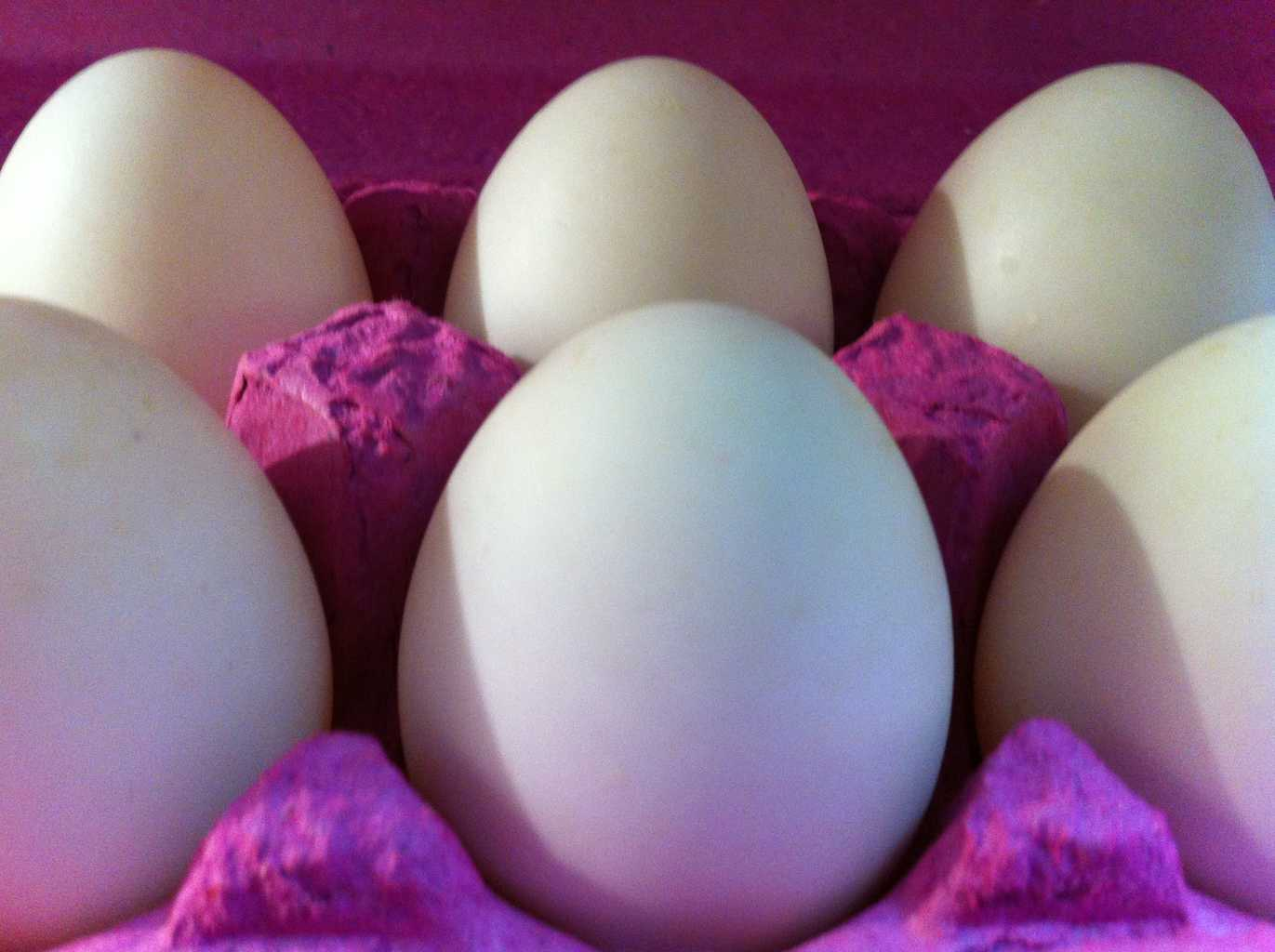 Duck eggs - Welsh Harlequin duck eggs
