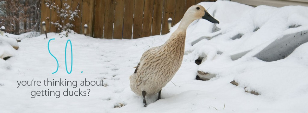 white-duck-featured-image