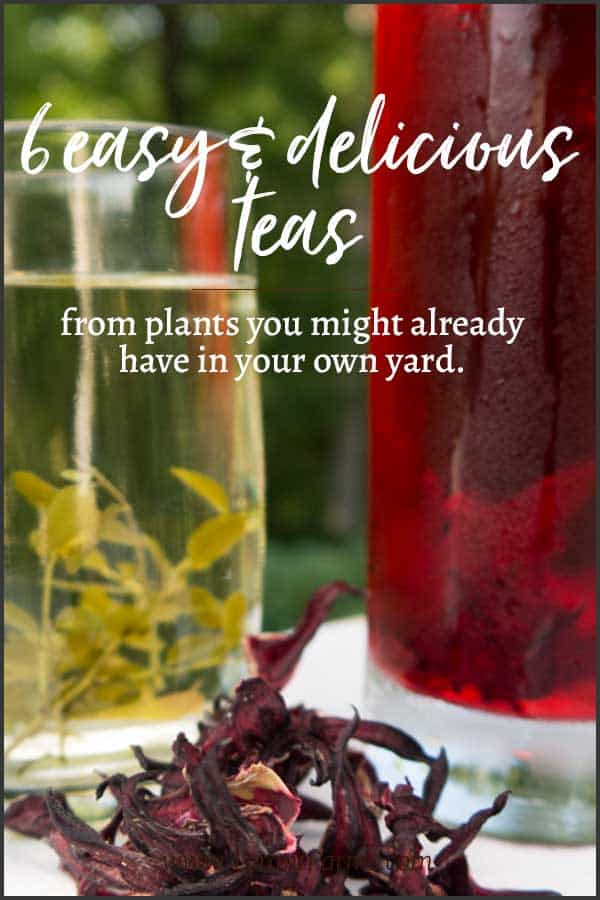 6 easy & delicious teas you can make from plants you probably already have in your yard! #growyourown #tyrantfarms #tea