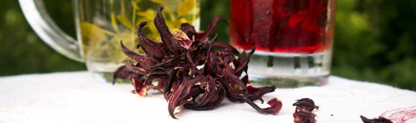 Hibiscus and Yaupon Holly Teas - www.tyrantfarms.com