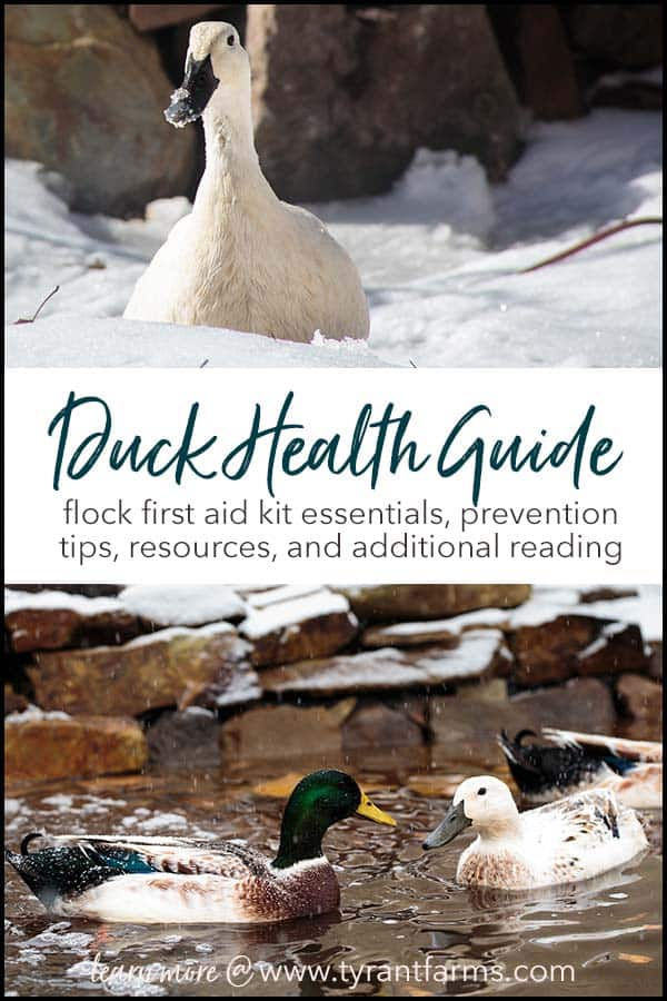 Got ducks? Thinking about getting ducks? Here's everything you need to know and have available to keep your flock healthy and safe. Article includes: supplements, vitamins & minerals, wound care, medications, supplies and more - plus how to save money and PREVENT your flock from getting sick or injured!