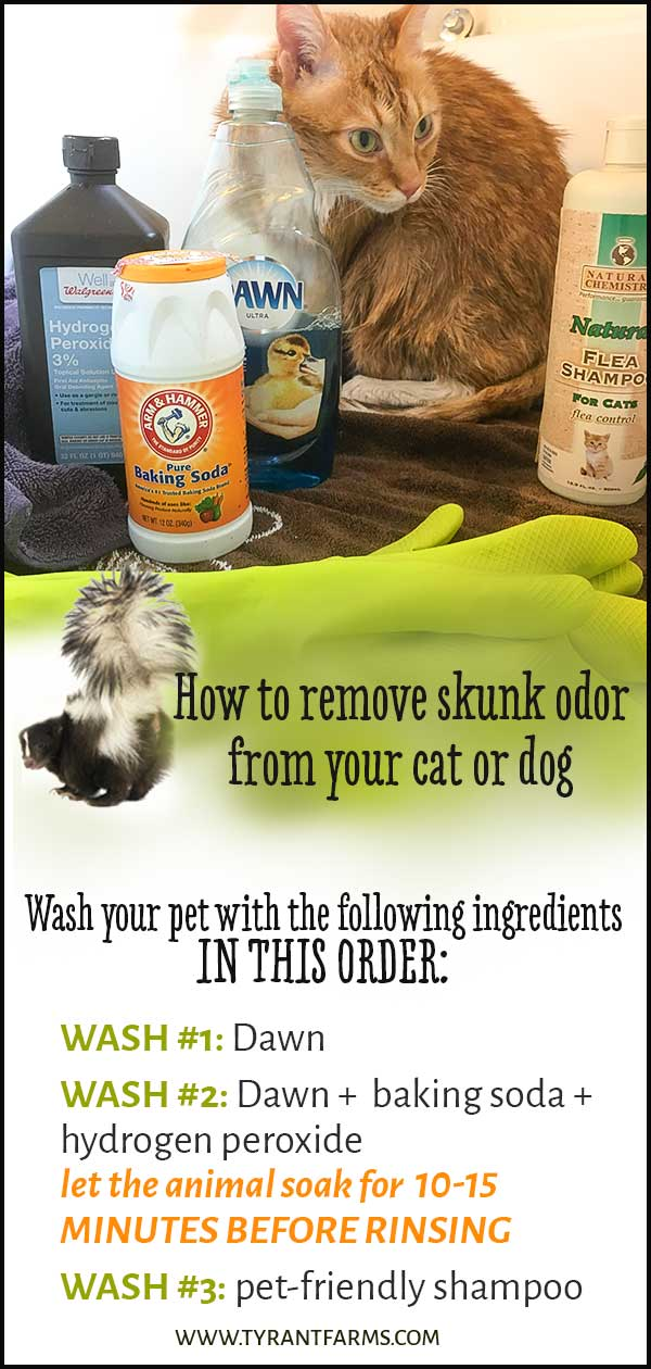 How to remove skunk odor from your cat or dog