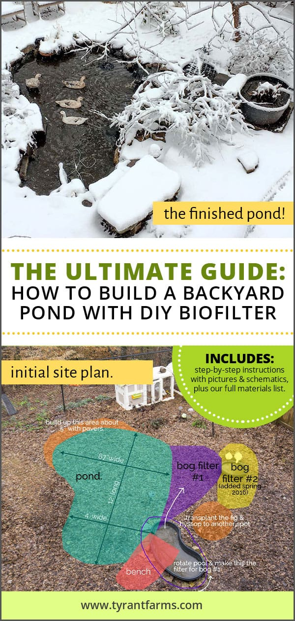 The Ultimate Guide: How To Build a Backyard Pond with DIY Biofilter