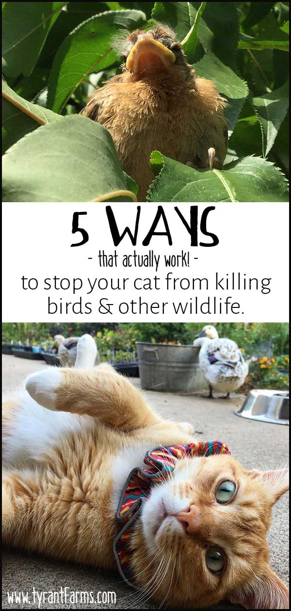 5 Ways (that actually work!) To Keep Your Cat From Killing Birds and Other Wildlife