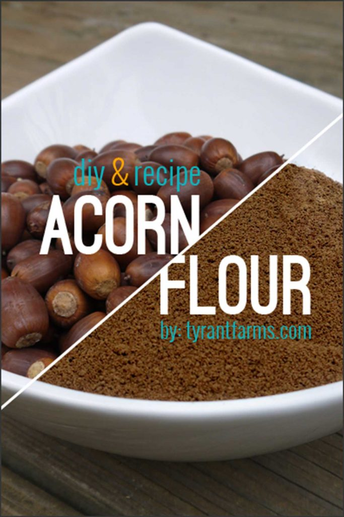 A simple DIY step-by-step guide with photos to help you make your own delicious, nutritious acorn flour from scratch. Plus, get three easy-to-make acorn recipes! #foraging #acornflour #tyrantfarms #wildcrafting