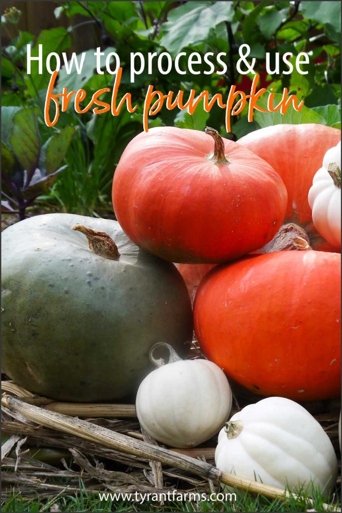 Learn how to process and eat your incredible, edible pumpkin. Also, learn how to eat other edible parts of your pumpkin: flowers, leaves, and seeds! #tyrantfarms #pumpkin #pumpkinflowers #pumpkinleaves #fall #fallrecipes
