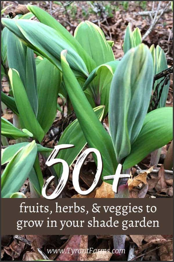 50+ fruits, herbs, and vegetables that will grow in your shade garden! #shadegarden #growyourown #gardening #shadgardening #tyrantfarms