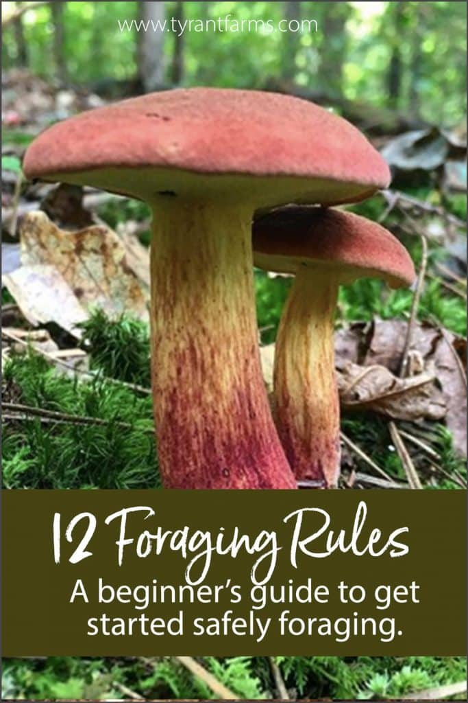 Want to learn how to forage wild foods? Our beginner's guide to foraging provides 12 rules and loads of helpful tips to get you started! #tyrantfarms #foraging #foragingtips #foragingguide #ediblewildplants #ediblewildmushrooms