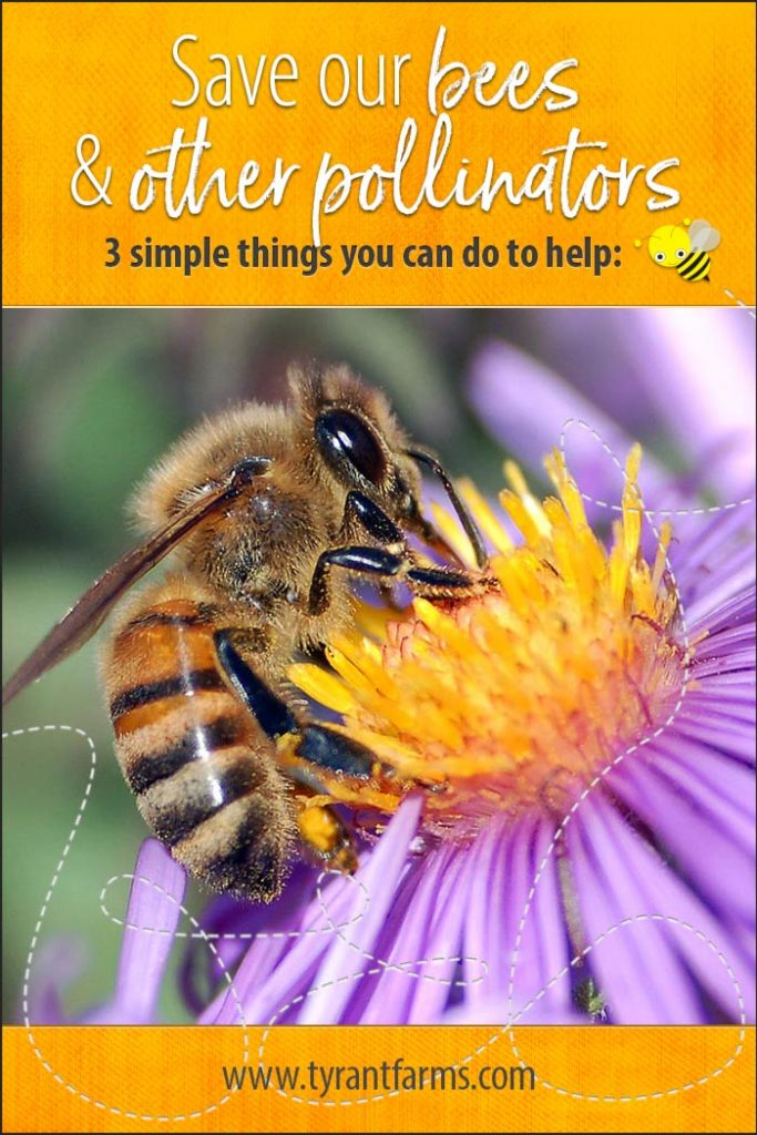 Save the bees & other pollinators. Here are 3 simple things you can do to help!! #savethebees #saveourpollinators #savethebutterflies #savethemonarchs #organicgardening #butterflygardeing #tyrantfarms