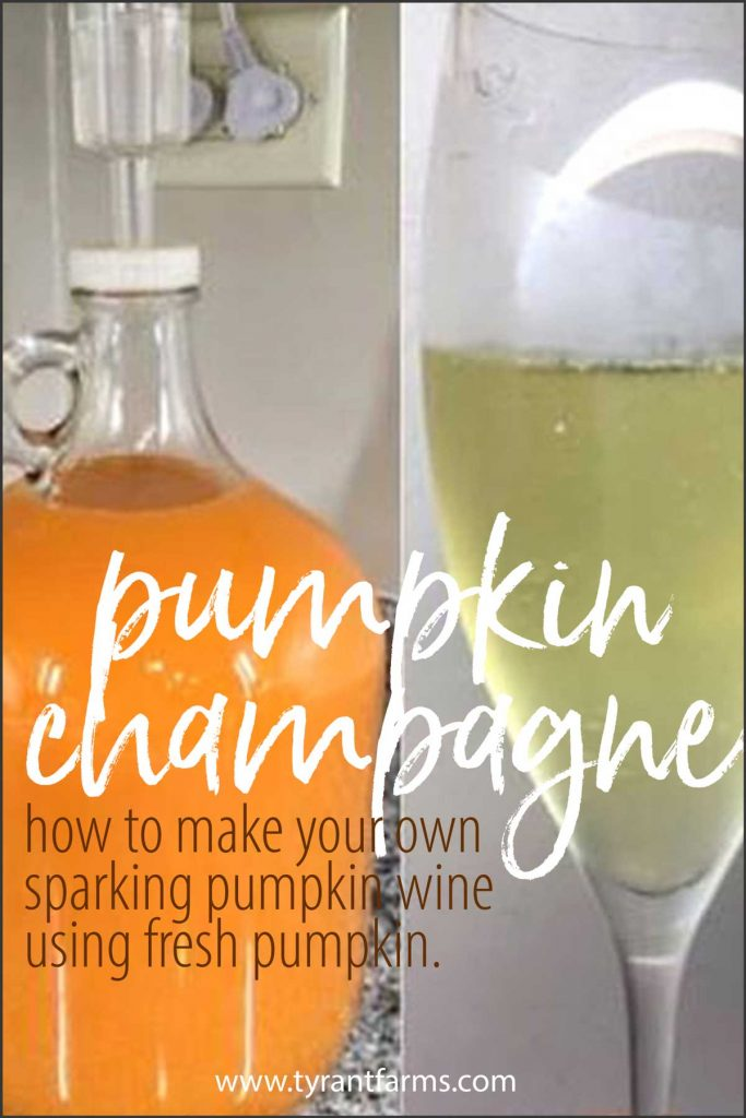 If you have sweet-flavored pumpkins, you can make your own pumpkin champagne or sparkling wine. Here's a time-tested recipe our friends shared using their own Williamson pumpkins (a family heirloom). #pumpkinrecipes #tyrantfarms #fermentationrecipe #winemaking #fruitwine