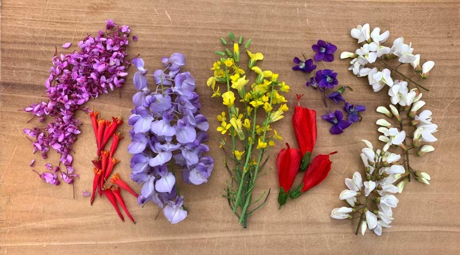 16 incredible edible wild flowers thumbnail