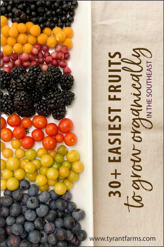 easiest fruit varieties to grow organically in the southeastern US